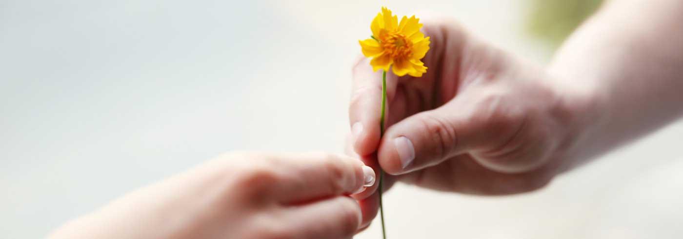 Eine Hand schenkt eine Blume