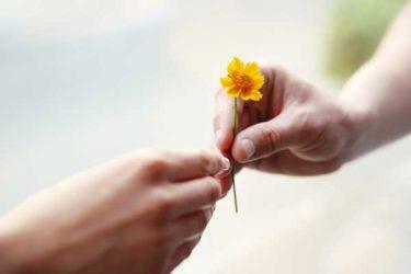 Hände halten und schenken eine Blume
